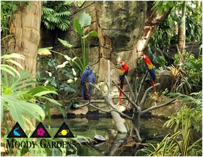 Parrots in Jungle at Moody Gardens